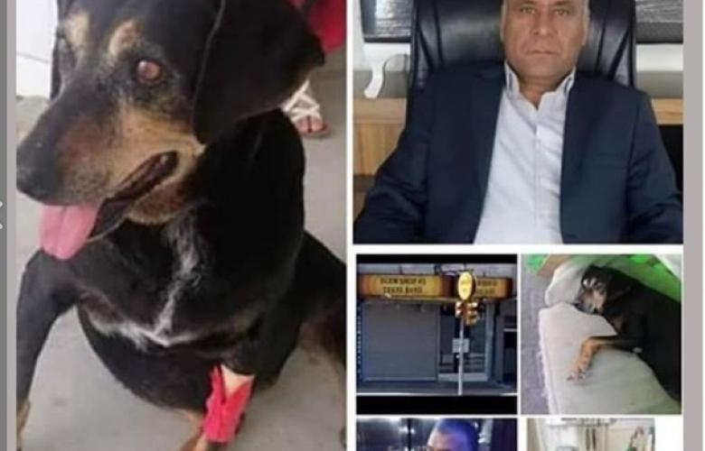 Türkiye Kartal'daki dükkanında döverek bir köpeğe tecavüz eden Mehmet Haner'i konuşuyor! YETER ARTIK!