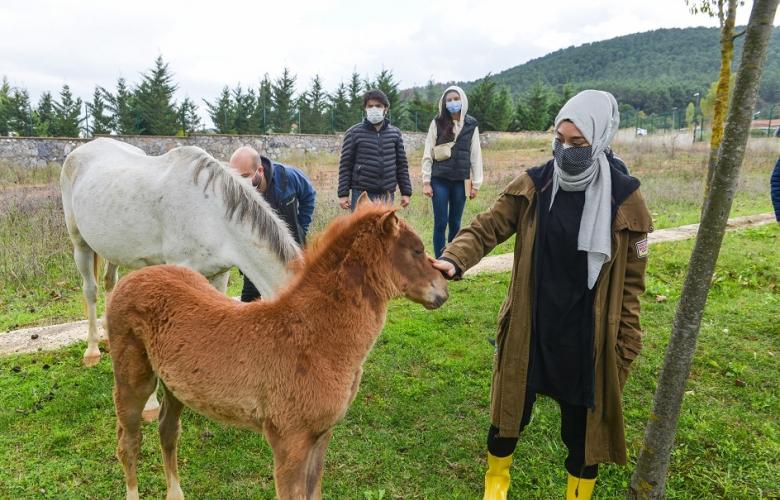 Ak Parti Milletvekili Rümeysa Kadak'tan hayvanlar için barınak denetimleri!
